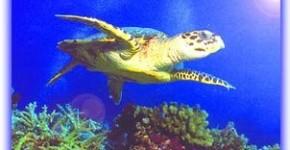 ecossistema marinho