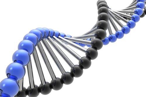 DNA Genetica Molecular